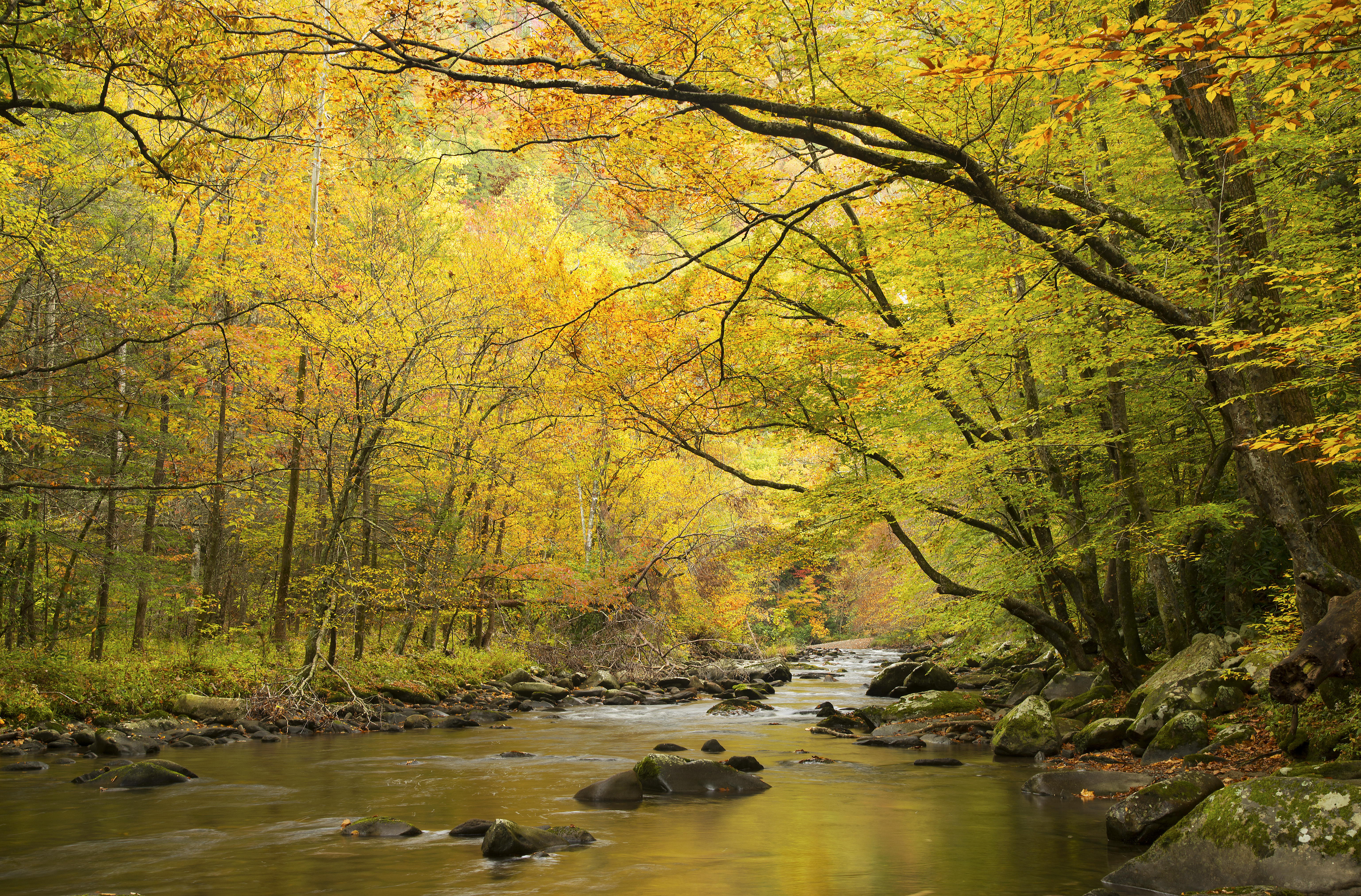 Golden colored fall leaves and still waters in the Smoky Mountains of Tennessee